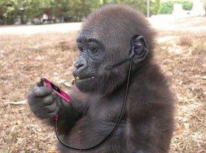 monyet-menelpon